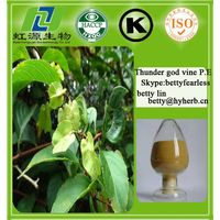100% Natural thunder god vine extract (Tripterygium wilfordii root extract)