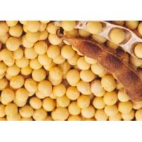 Soybean extract /Soybean Isoflavones Extract/P.E thumbnail image
