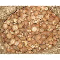 Dried Betel Nuts / Betel Nuts / Slice Betel Nuts for Sale / betel nuts whole and split