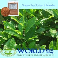 100% Natural Green Tea Extract Powder With Tea 98%Polypheanols