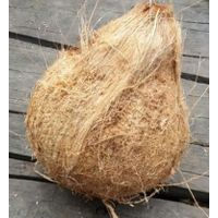Semi-Husked Matured Coconut