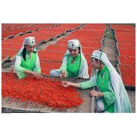Medlar Organic Food Goji Berry Wolfberry thumbnail image