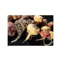 Maca Powder, Extract, Concentrate, Organic, Freeze Dried, Capsules, Maca Root thumbnail image