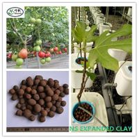 Uniform Sizes Lightweight Expanded Clay Pebbles for Hydroponic Growing Media