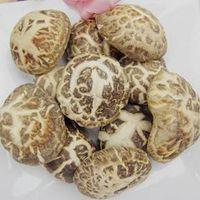 Organic Dried shiitake mushroom bulk