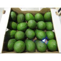 FRESH AVOCADO FRUIT/ HASS AVOCADO FOR SALE