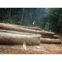 Tropical Round Logs Supplies.