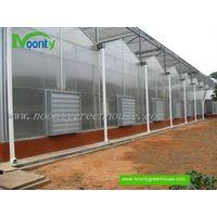 Venlo Polycarbonate (PC) Greenhouse thumbnail image