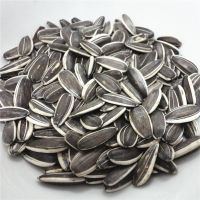Unprocessed type 5009 full organic kernel raw black sunflower seeds with shell