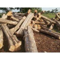 Teak wood logs for sale thumbnail image