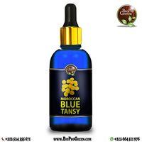 Moroccan blue tansy essential oil