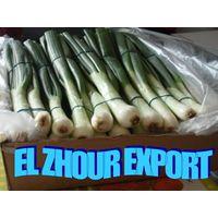 Fresh Spring Onion thumbnail image