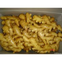 china fresh ginger with GAP Certificate market prices for ginger