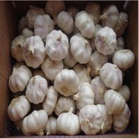 China garlic supplier export fresh garlic with good price