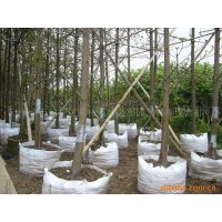 Plant bag pot contain Tree root control bags