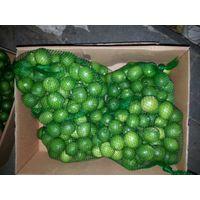 fresh lime thumbnail image