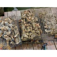 Oyster mesh cage