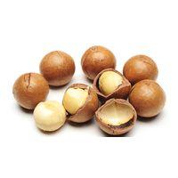 Macadamia nuts / Macadamia / Cashew Nuts