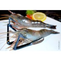 Shrimp (Black Tiger, Vannamei) Specialist - OFCO Inspection - Sourcing - Services