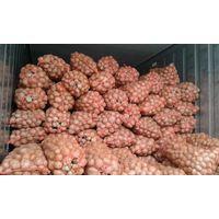 Fresh potato from Vietnam ( Holland potato )