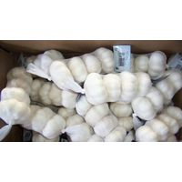 Normal white garlic thumbnail image