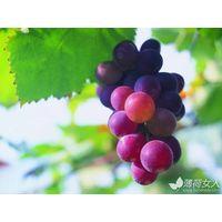 Grape Seed P.E thumbnail image