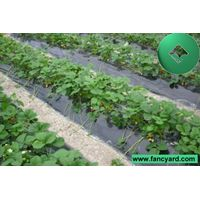 agriculture film,agricultural film,mulch film,mulching film,ground film,covering film,plastic film,p thumbnail image
