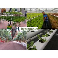 Large multispan greenhouse for hydroponics