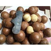 Top High Quality Macadamia nuts thumbnail image