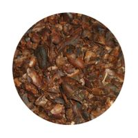 cocoa beans seeds Extract