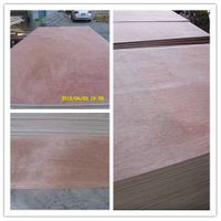 Commercial Plywood/Bintangor /Okoume/Pine/Birch Plywood at Wholesale Price