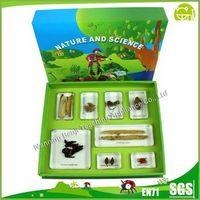 Preschool Educational Medicinal Plants set for Teaching Aids or Display thumbnail image