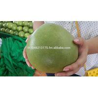 Fresh Premium Pomelo From Thailand thumbnail image