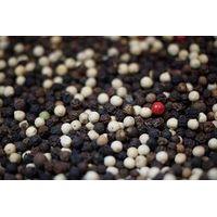 black pepper/white pepper (piper nigrum)
