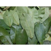 Dried Graviola leaf with high quality