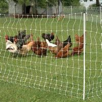 BOP plastic chicken net /chicken wire mesh