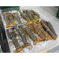Fresh Lobster for sale