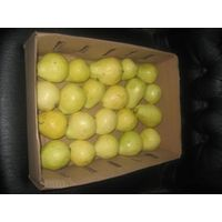 Guava thumbnail image