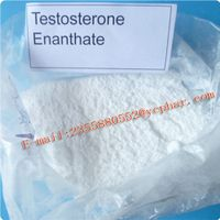 Testosterone Enanthate Steroids Hormone for Bodybuilding Testosterone Enanthate